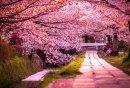 Photo de Japan-Haikus