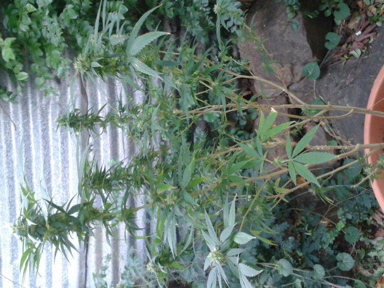 Plant 4mois