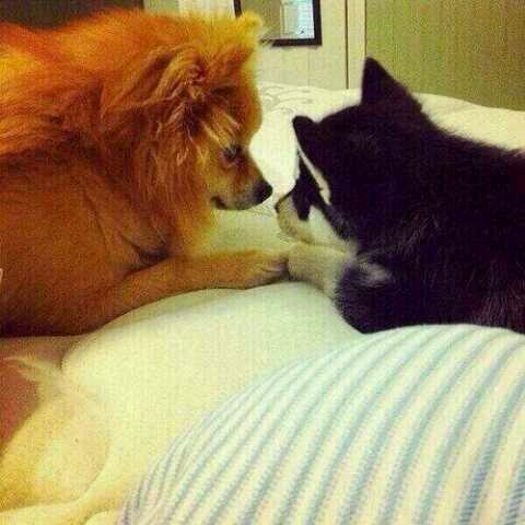 Hatchi et Loki récemment