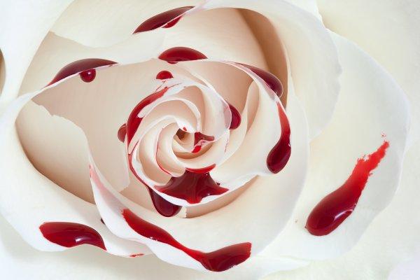 L'envers de la rose