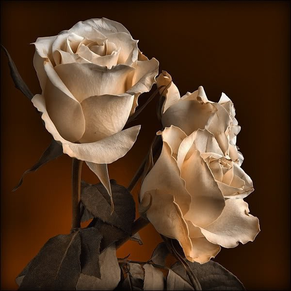(l) (l) KDO POUR SES AMIS(ES) DE JOLICOEURDEFEMME (l) (l) Merci ma très chère amie que j'adore!