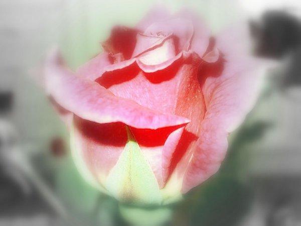 Ce n'est pas la mort qui nous prend ceux que nous aimons ; elle nous les garde au contraire et les fixe dans leur jeunesse adorable : la mort est le sel de notre amour ; c'est la vie qui dissout l'amour.