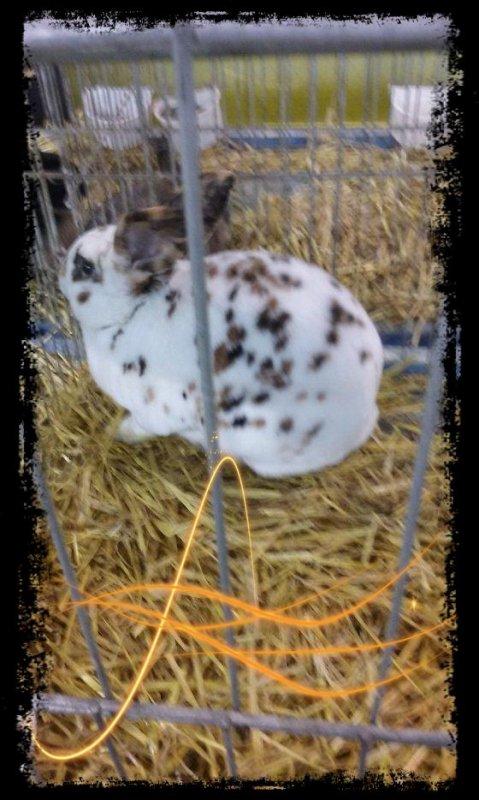 Les lapins ?!