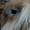 Haily-Rabbit