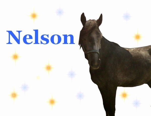 NELSON♥♥; Quand je te voit je me dit que la vie n'est pas si affreuse♥♥!