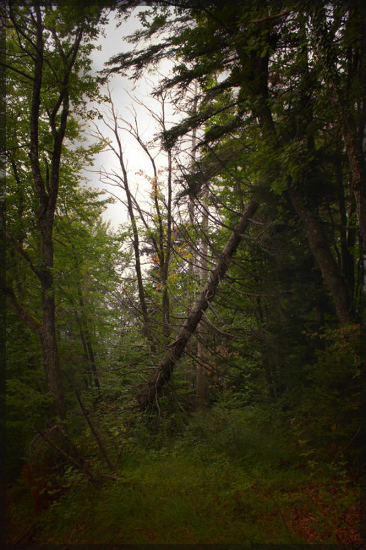 Un lointain écho, au fond d'une vallée perdue dans le mugissement du vent...
