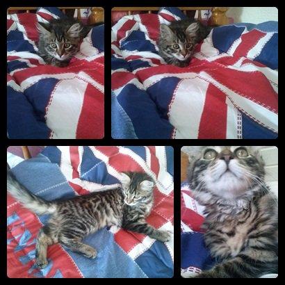 Mon chat *-*