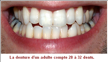 Leçon de choses _ Les dents