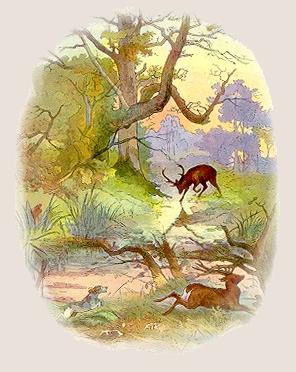 Fable de La Fontaine  -  LE CERF SE VOYANT DANS L'EAU