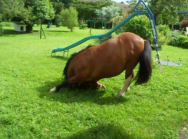 La plus belle chose au monde c'est la confiance entre un cavalier et son cheval♥