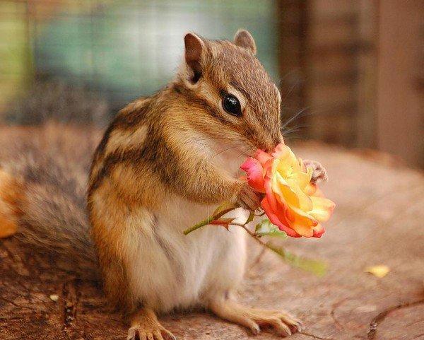 Petit écureuil 1