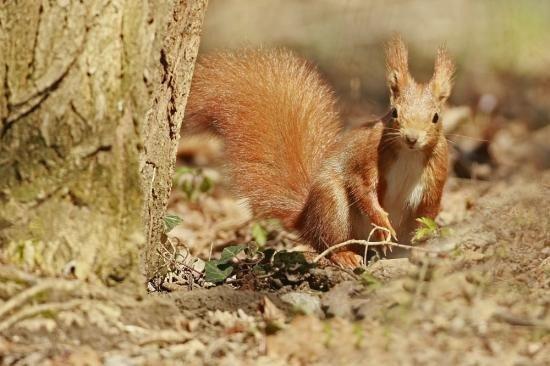 Petit écureuil 2