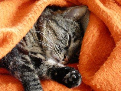 Mon amour de chat : Mouloud