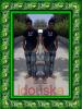 idouska-ichnar