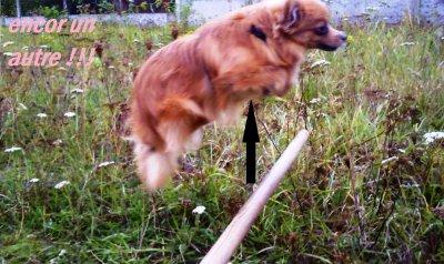 Plusieurs façons de sauter