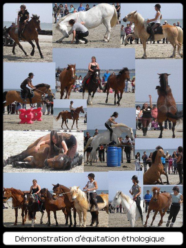 Démonstration d'équitation éthologique