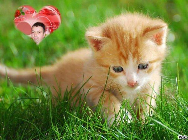 inlove : mon petit chaton , que j'aime de tout mon coeur