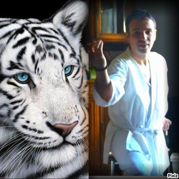 me voici pour cette nouvelle année qui déjà commencé la ,  je suis entrain de faire une prise de Karaté justé coté de ce joli Tigre blanc .