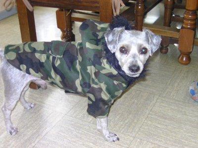 mon chien qui par en guerre