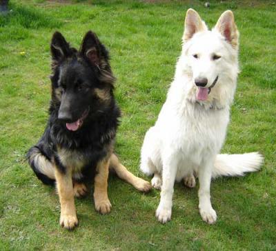 mes deux chien jumeaux