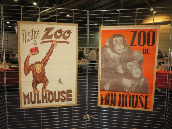 ♥ Exposition photos  - Zoo de Mulhouse - 12 février 2018 ♥