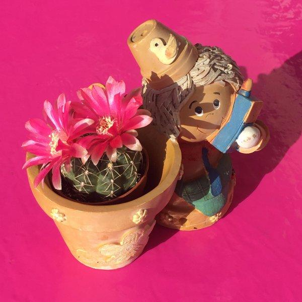 ♥  Mini cactus ♥