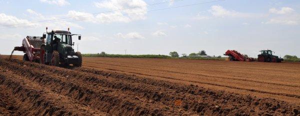 Tamisage avant plantation de pomme de Terre ...