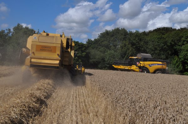 Moisson de blé en New Holland ! ! !