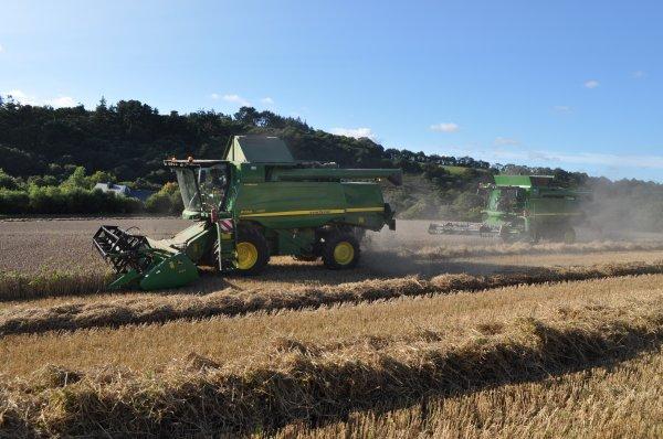 Moisson de blé à la Roche Maurice