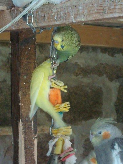 Voici mes jeunes acrobate de 2011