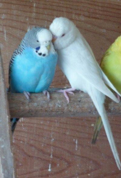 Voici deux petits qui papouille leur maman