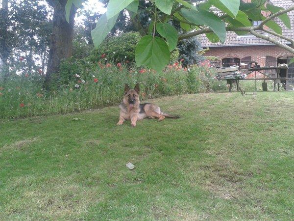 lasko dans l'herbe avec la belle elvire de l'alda