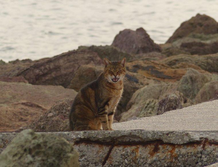 ☼ Voyage à Cannes 2015 - Bonus : Les Chats du port de Mandelieu La Napoule ☼