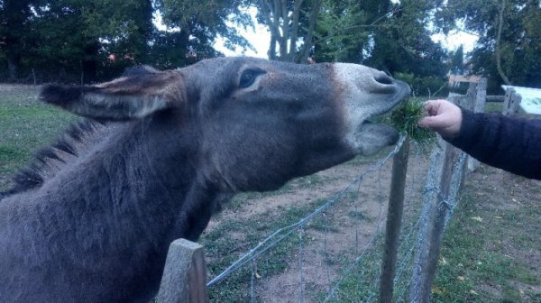 Photo d'un âne