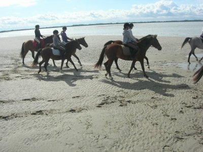 L'équitation, bien plus qu'une passion, une vie <3