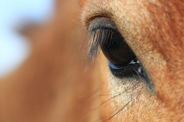 ~ Le cheval est un cadeau de dieu à l homme. Faîtes du cheval un compagnon et non un esclave, vous verrez quel ami extraordinaire il est.