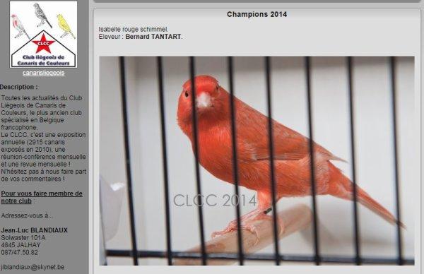 Mes oiseaux à Waremmes