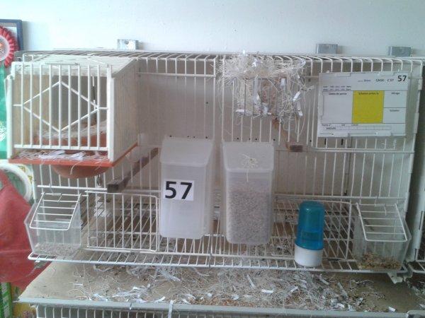 Les premiers nids 2016
