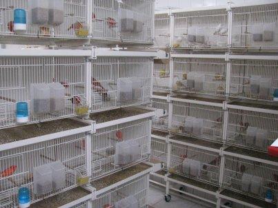 28 cages à vendre