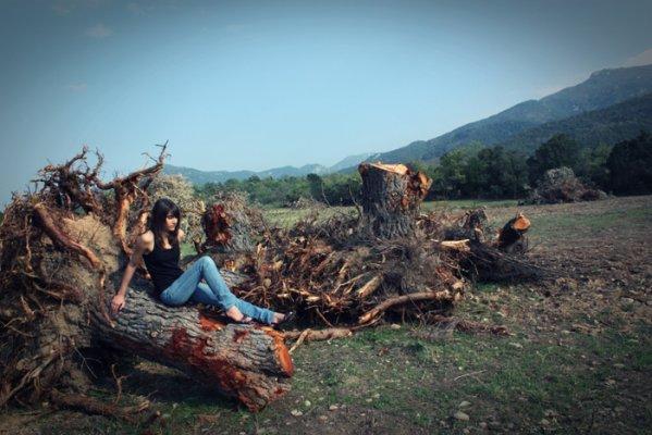 Comme un arbre sans racines comme le th atre sans racine nawaakeuuuuuu - Arbre sans racine envahissante ...