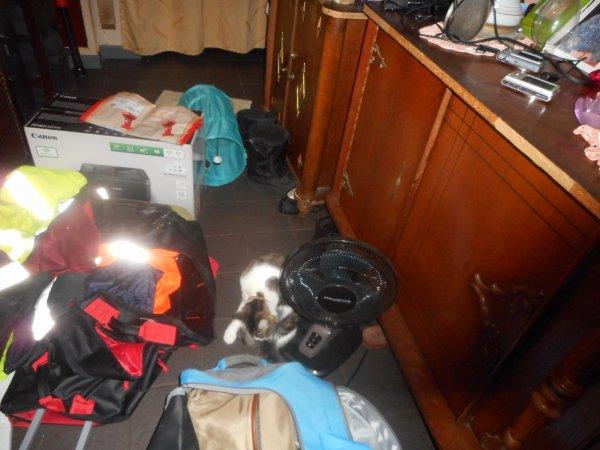 hommage as mémère ma chatte déjà 54 semaine dque tu es partie mémère Hommage as mémère une de mais chatte décède
