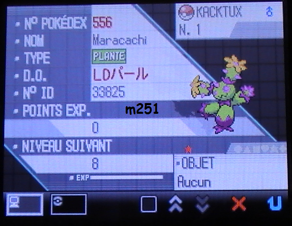 "Maracachi ""KACKTUX"" Shiney"