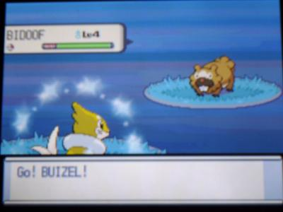 buizel shiney