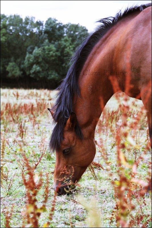 « Le cheval est pour l'homme comme les ailes pour l'oiseau.»