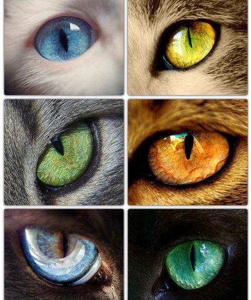Miaouyeux TROP beaux !!!!!