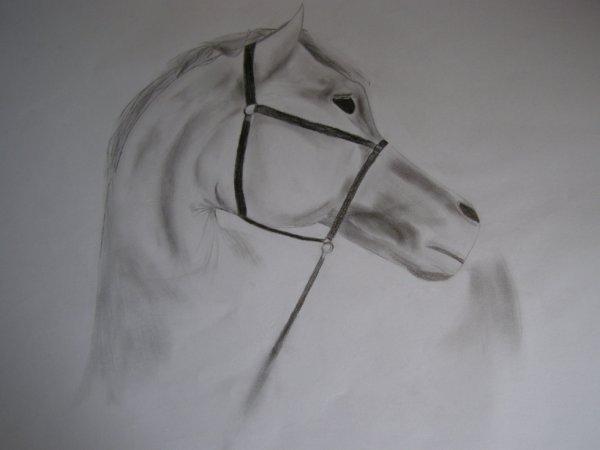 dessin de cheval ^^