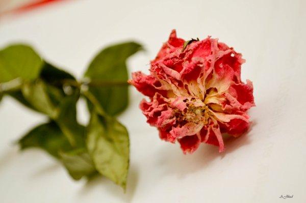 Savons-nous ce que serait une humanité qui ne connaîtrait pas la fleur?