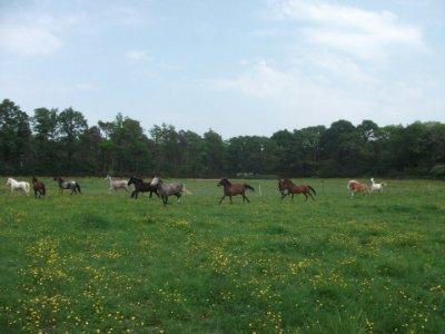 Les chevaux ♥`