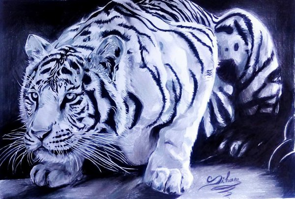 by Siham bouyerbou (tigre)