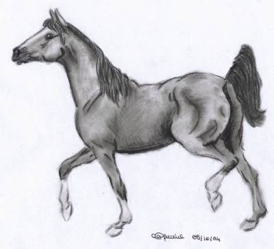 cheval arabe dessin
